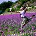 Ở đâu có cánh đồng hoa oải hương?