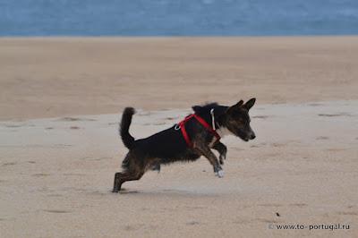 взять собаку с улицы в Португалии