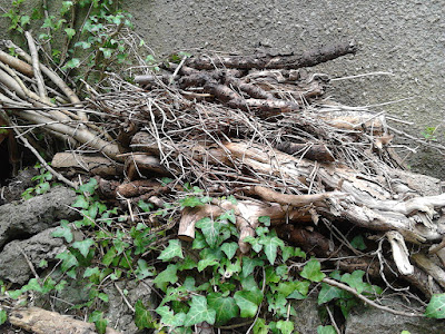 Piles of twigs to encourage wildlife Cutting back perennials Green Fingered Blog