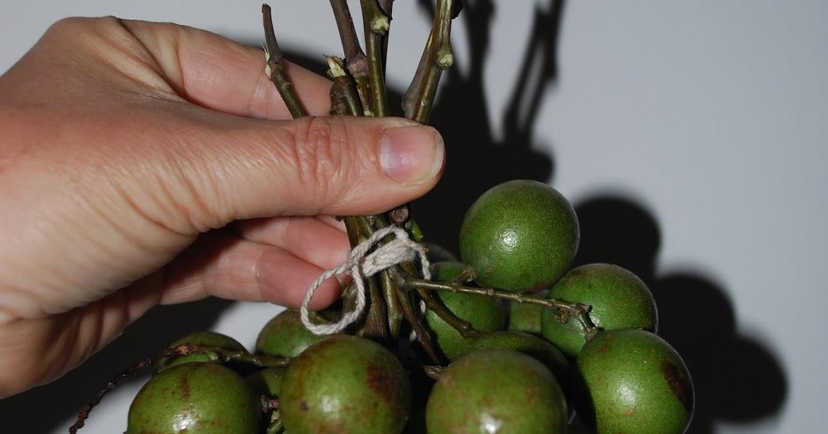 Atemberaubend Humboldtina - Venezuela: Honigbeere, Quenepa, Dotterknippe &QQ_13