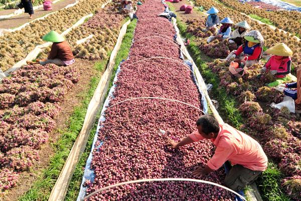 https://tipspetani.blogspot.com/2019/01/sekilas-info-tentang-jurusan-agribisnis.html