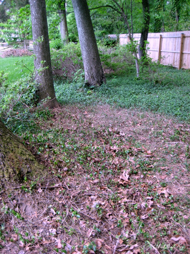 How to remove ivy ground cover | Meet the B's