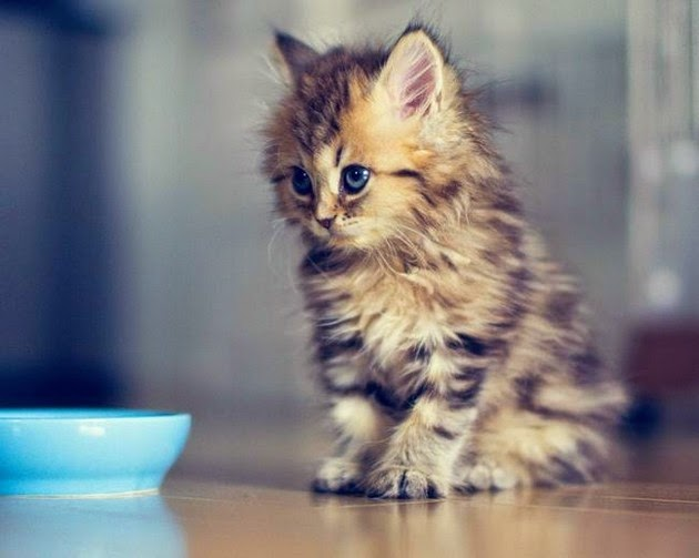 tiny-kittens-pictures-4
