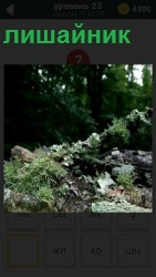 800 слов в лесу на камнях растет лишайник 23 уровень