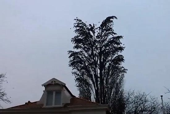 Encontre 1 pássaro nessa árvore - Img 1