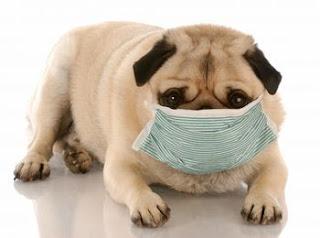 Protege a tus perros contra la tos de perrera
