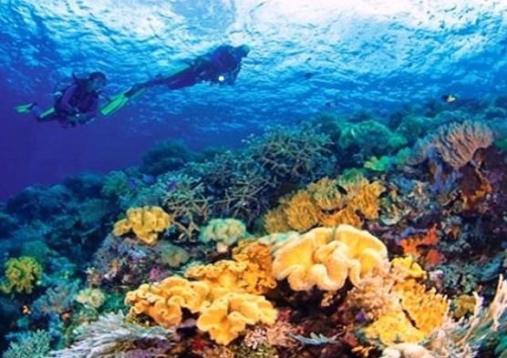 Spot Diving di Wakatobi