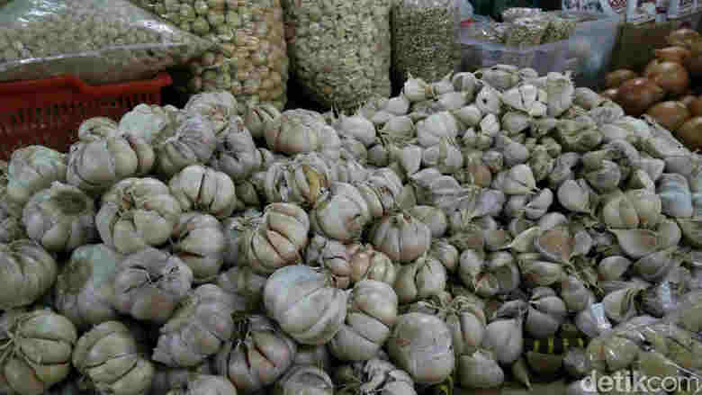Bawang Putih Kating India