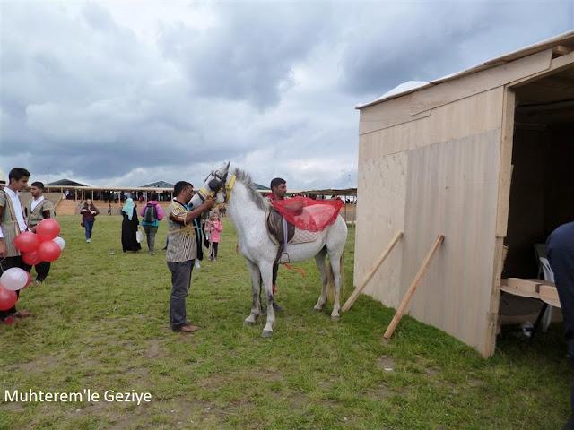 beyaz gelin atı resmi