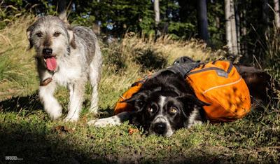 Kutyákkal a Börzsönyben