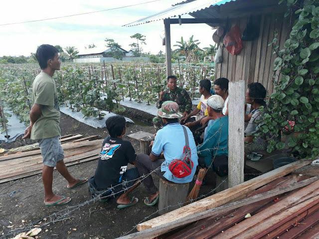 Koramil Nabire Kelurahan Laksanakan Komsos dan Penyuluhan ke Petani Melon Kali Semen