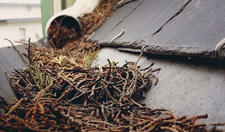 mousse sur ardoise de toit