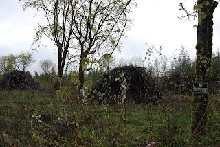 trees fruit grove cut down