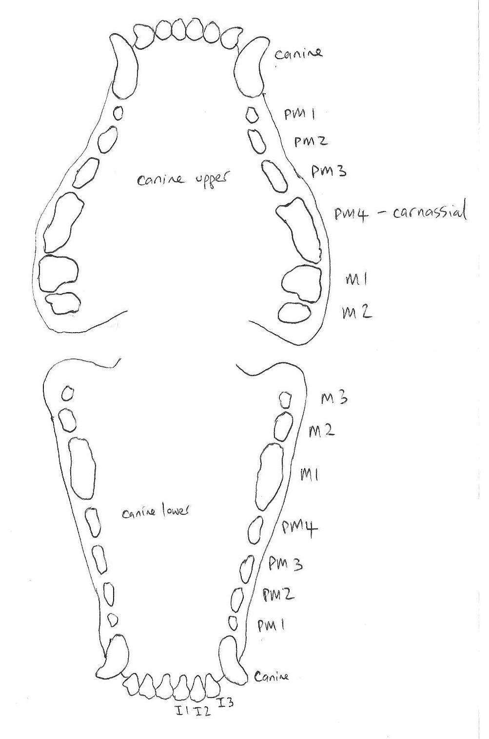 Case Report: Mandibular Fracture Repair
