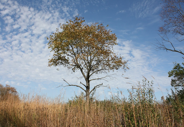 Fall brings golden and brown hues to Volo Bog in Illinois.