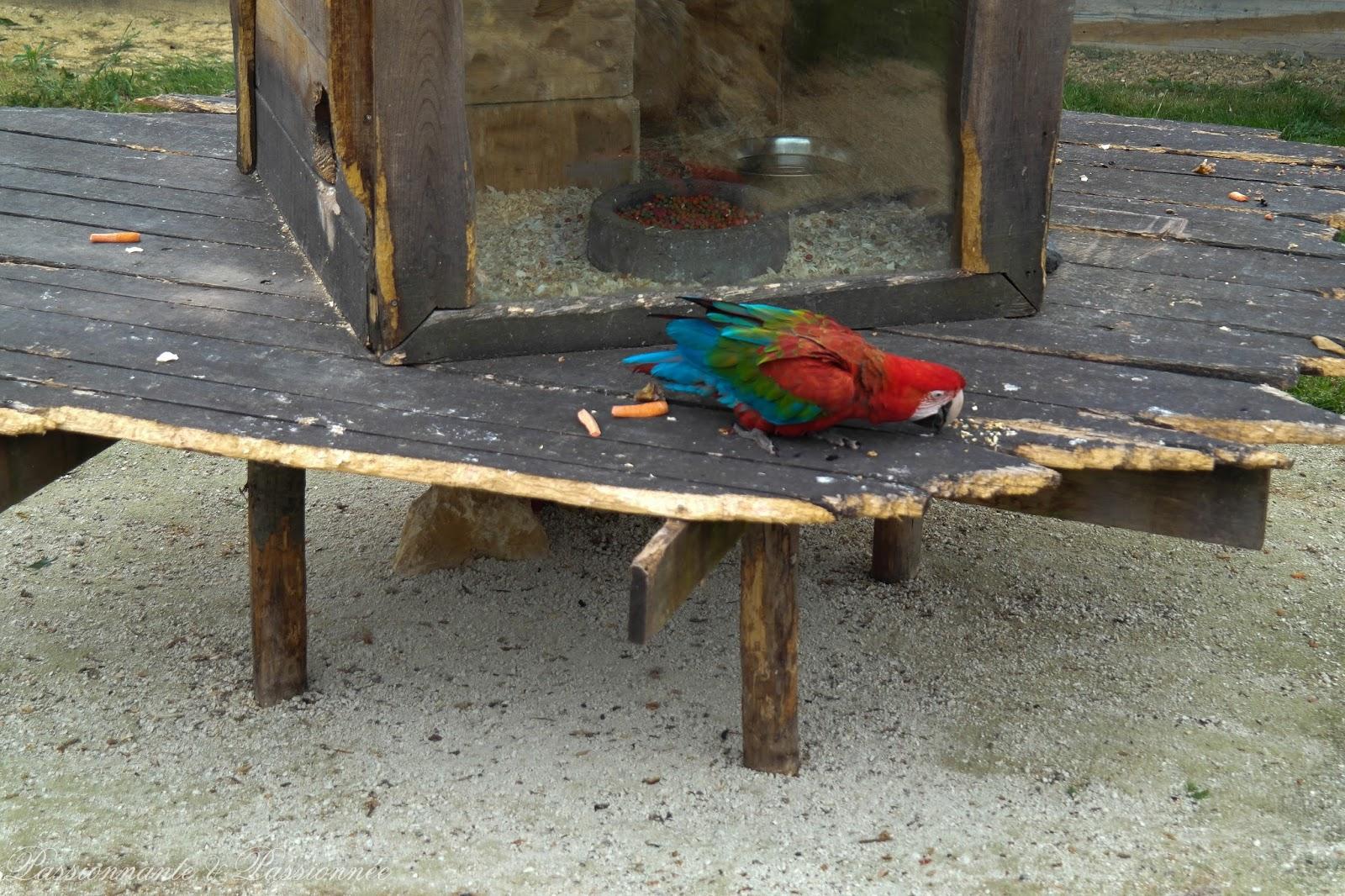 Les perroquets chez planètes sauvages