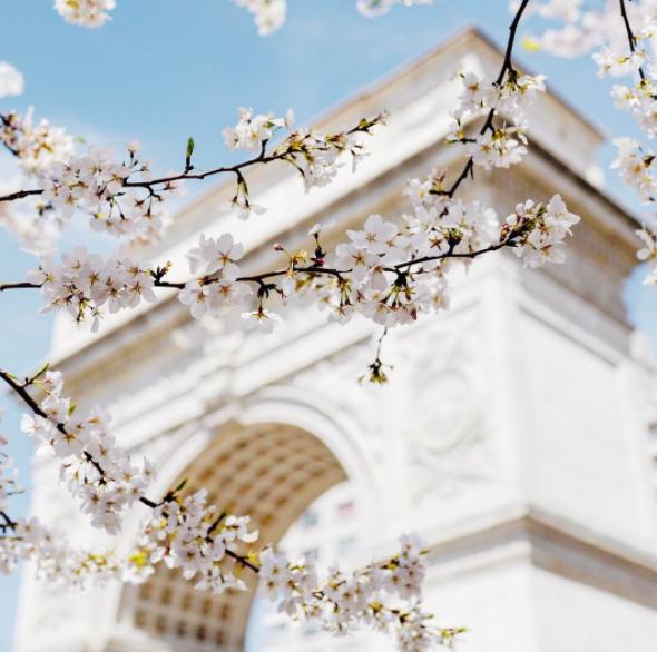 Washington Square Park | with @newyorkcity instagram