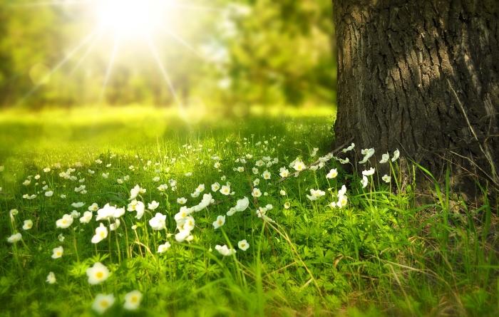 Flores brancas ao pé de uma árvore