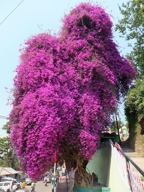 любимое дерево для пчел