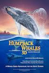 Cá Voi Lưng Gù - Humpback Whales