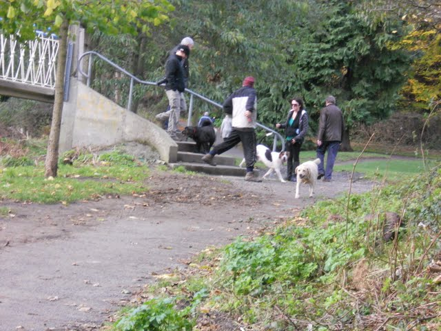 Walk the River Dodder in Dublin - dogwalkers