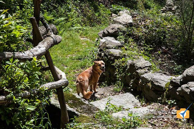 Ambra nell'ultima parte di sentiero da monte Venere a Maccagno