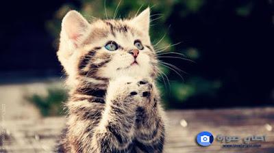 صور قطط جميلة 2019 ~خلفيات قطط كيوت