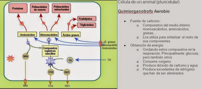 aulabiogeotoni: 2º BIOLOGÍA BACHILLERATO. <a href=