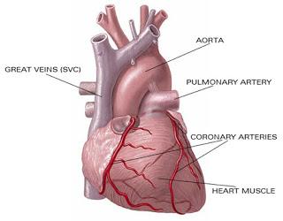 tips menjaga jantung