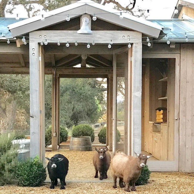 Goats at Patina Farm - found on Hello Lovely Studio