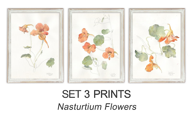 https://www.etsy.com/listing/487288675/nasturtium-watercolor-drawing-set-3