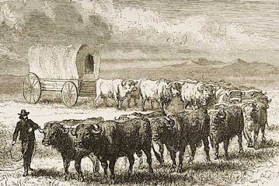 Essay on migration of animals