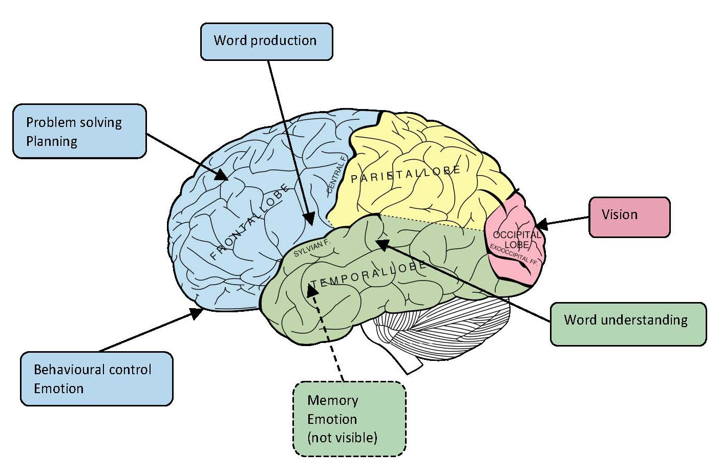 Brain Jack Image: Brain Diagram And Functions