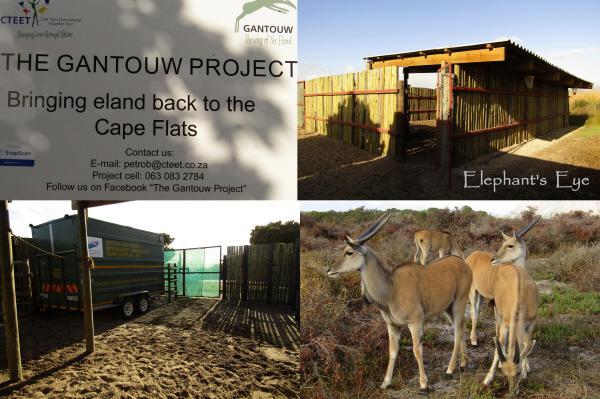 Gantouw Project boma