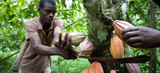 Olam supports 10,000 cocoa farmers 2