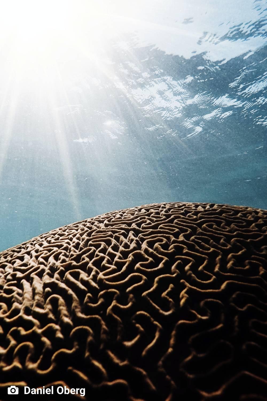 ambiente de leitura carlos romero alberto lacet fenomenologia da vida visao cosmica historia do universo fenomeno biologico origem da vida