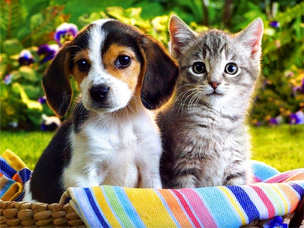 funny puppies and kittens - photo #4