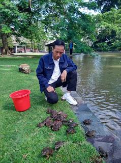 Jokowi Dan Kecebong/Kodok