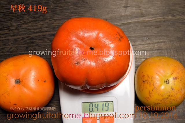 柿の品種と種類一覧トップ