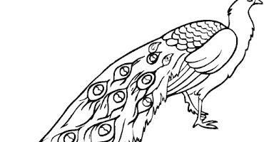 Gambar Burung Cendrawasih Yang Belum Diwarnai Crimealirik Page
