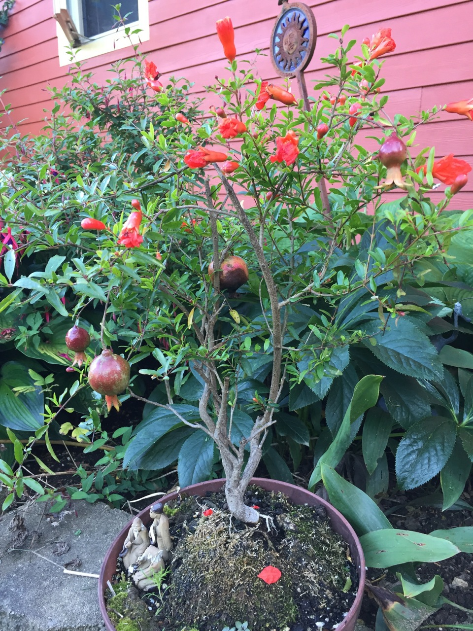 Julie Zickefoose on Blogspot: August Rocks: Garden Tour 1