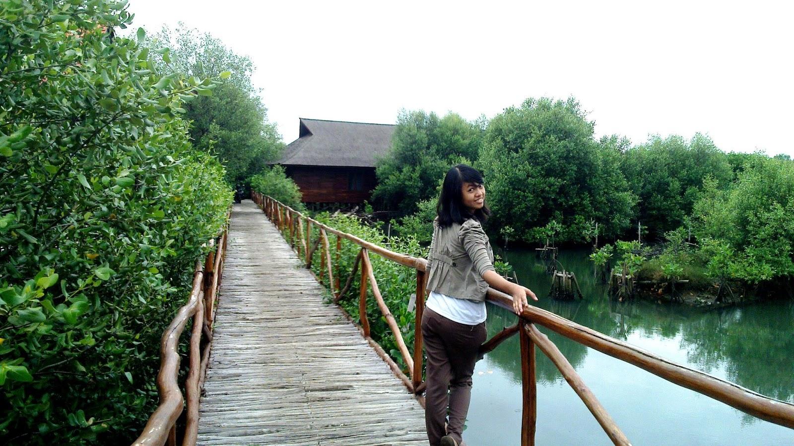 Pesona Wisata Kawasan Hutan Mangrove di Kebumen - Travel story of Indonesia