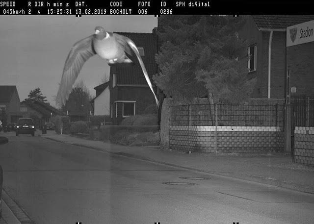 Pombo é pego no radar em velocidade superior à permitida, e multado em 25 euros