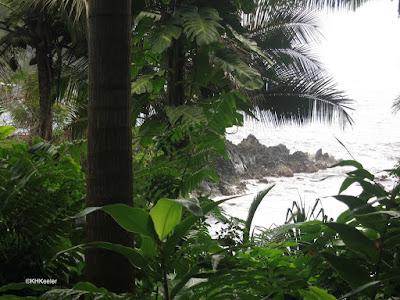 the wet coast of Hawaii