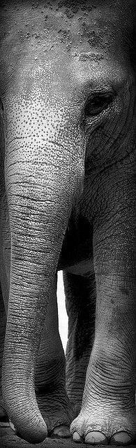 imagen de trompa de elefante