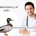 Chiste: El veterinario y el pato