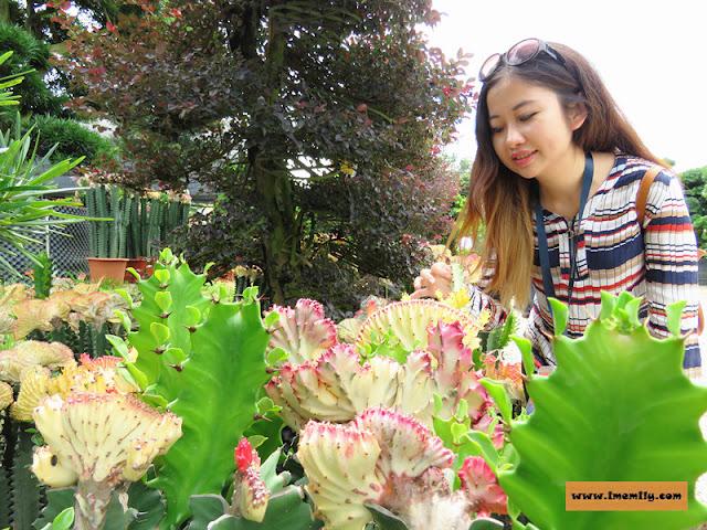 Tan Kok Leyong Nursery cactus