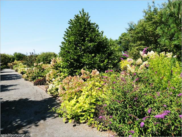 Shrub Garden en el Jardín Botánico de Montreal