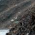 Hernieuwbare energie uit vaste biomassa groeit