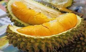 resep masakn dari buah durian